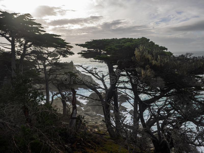 Árvores resistidas de Monterey Cypress na costa fotografia de stock
