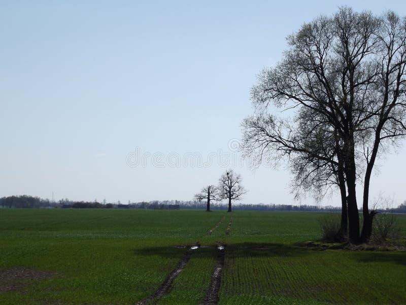 Árvores ressurgentes imagem de stock