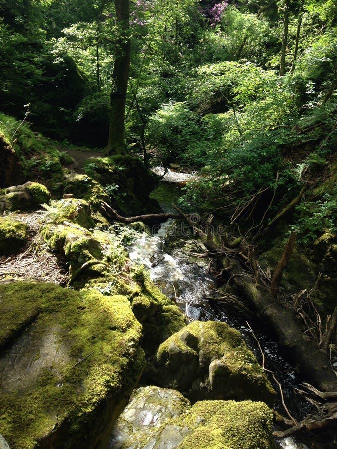 Árvores, rochas & caminhos imagem de stock