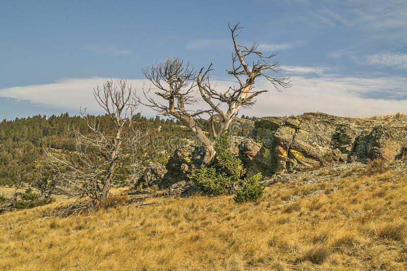 Árvores, rochas, e líquene desencapados fotos de stock royalty free