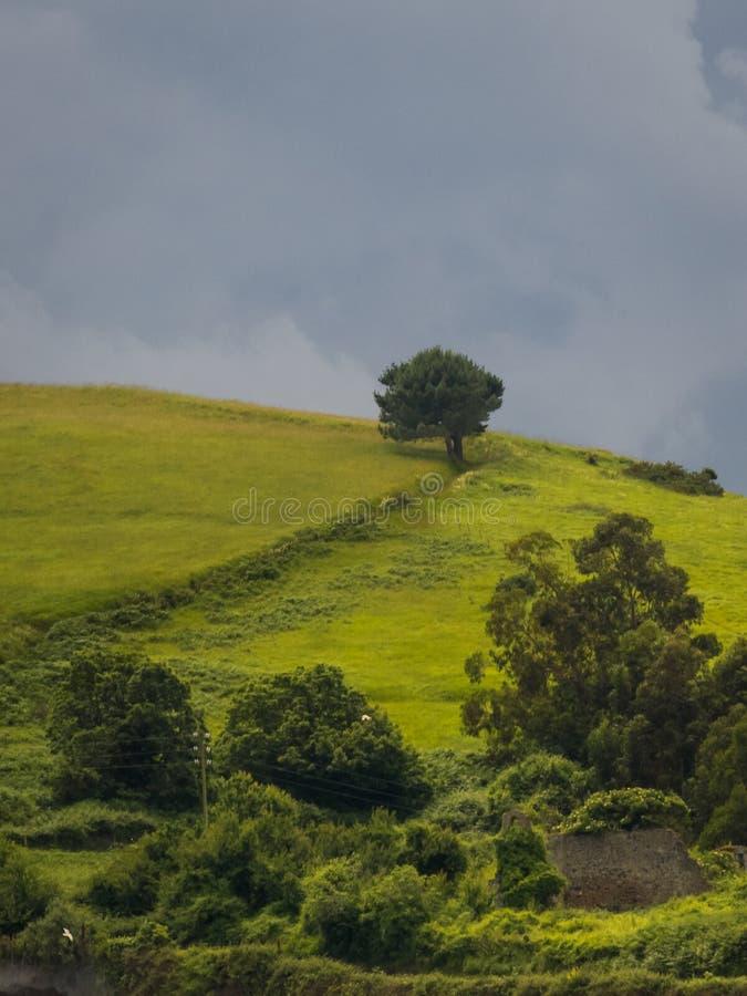 Árvores sós em um monte em um dia nebuloso imagem de stock