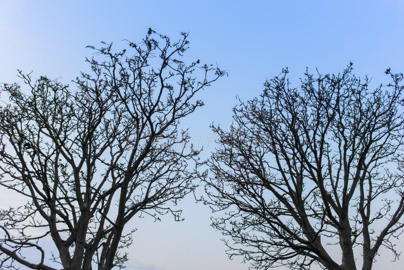 Árvores secas gêmeas imagem de stock