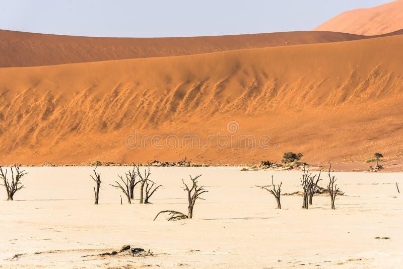 Árvores secas inoperantes distantes do vale de DeadVlei no deserto de Namib imagem de stock