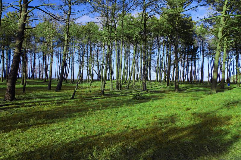 Árvores secas no campo verde imagem de stock royalty free