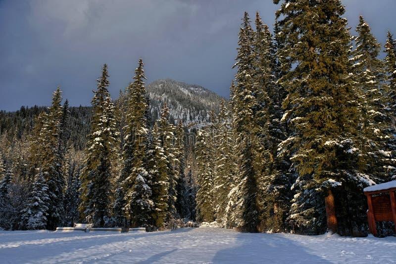Árvores sob a luz solar do inverno imagem de stock royalty free