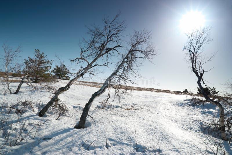 Árvores sob a neve imagem de stock royalty free