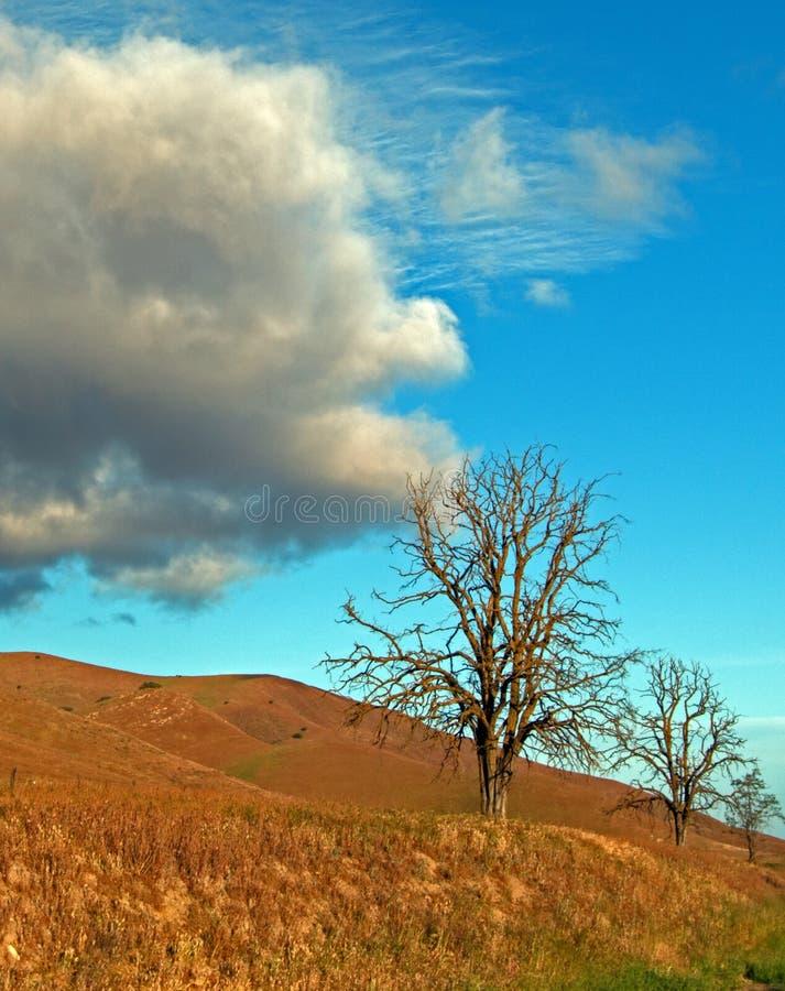 Árvores sob nuvens cumulous e lenticular do cirro na mola adiantada em Califórnia central foto de stock