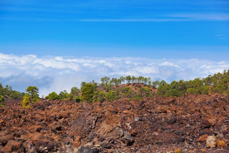 Árvores sobre nuvens no vulcão Teide na ilha de Tenerife - canário foto de stock royalty free
