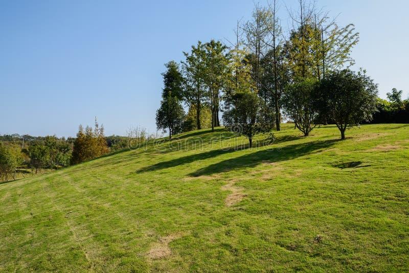 Árvores sobre o monte gramíneo na tarde ensolarada do inverno imagens de stock