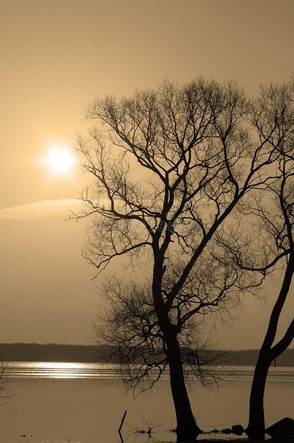 Árvores solitárias fotos de stock royalty free