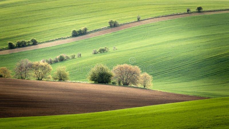 Árvores solitárias e arbustos que estão em um campo ondulado na mola fotografia de stock