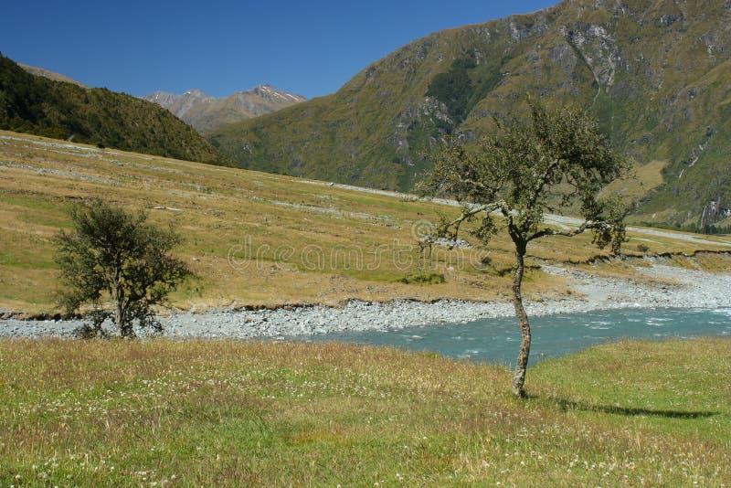 Árvores solitários no rio de Matukituki fotos de stock royalty free