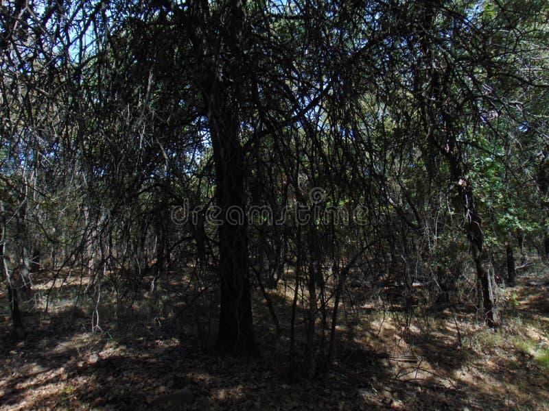 Árvores sombrios para sempre foto de stock royalty free