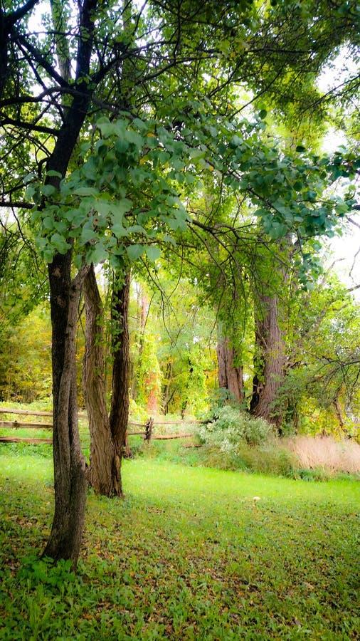 Árvores sonhadoras fotos de stock royalty free