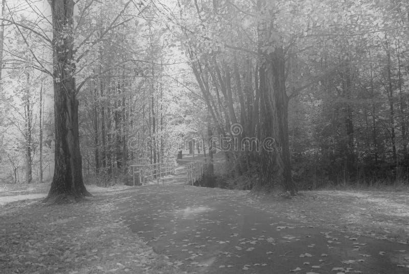 Árvores sonhadoras do parque fotografia de stock royalty free