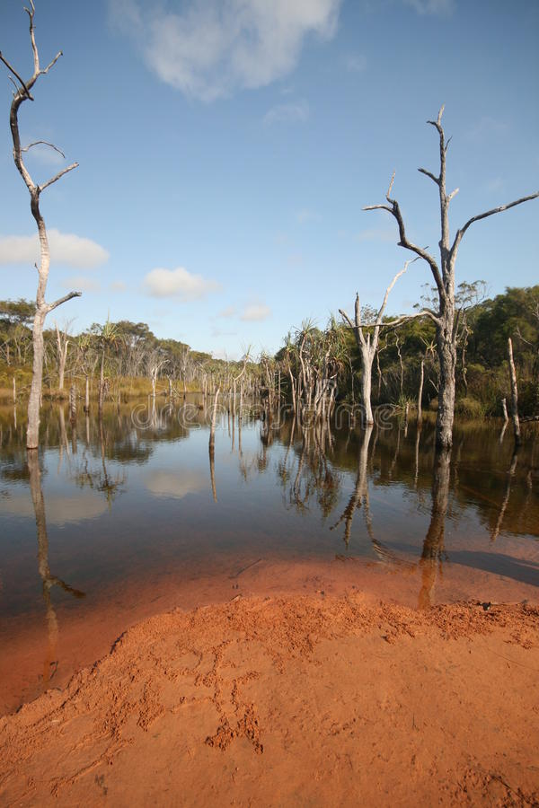 Árvores subaquáticas, lagoa de Sheldon foto de stock royalty free