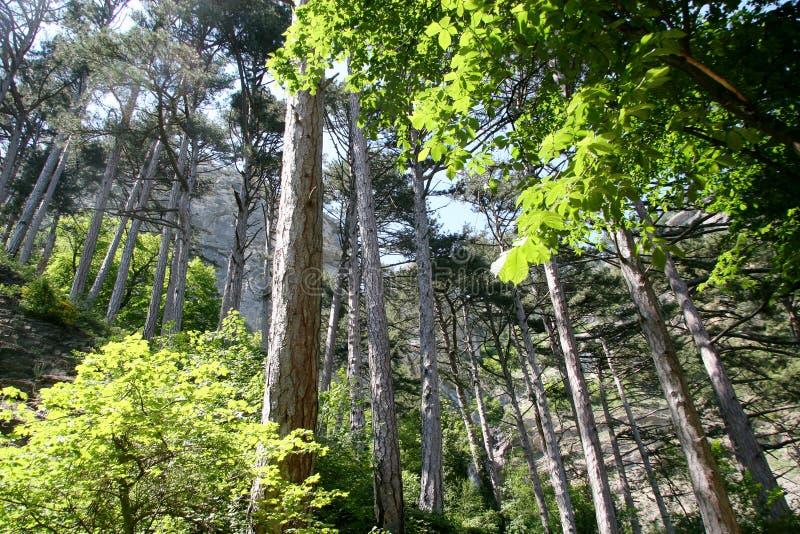 Árvores Sunlit fotografia de stock