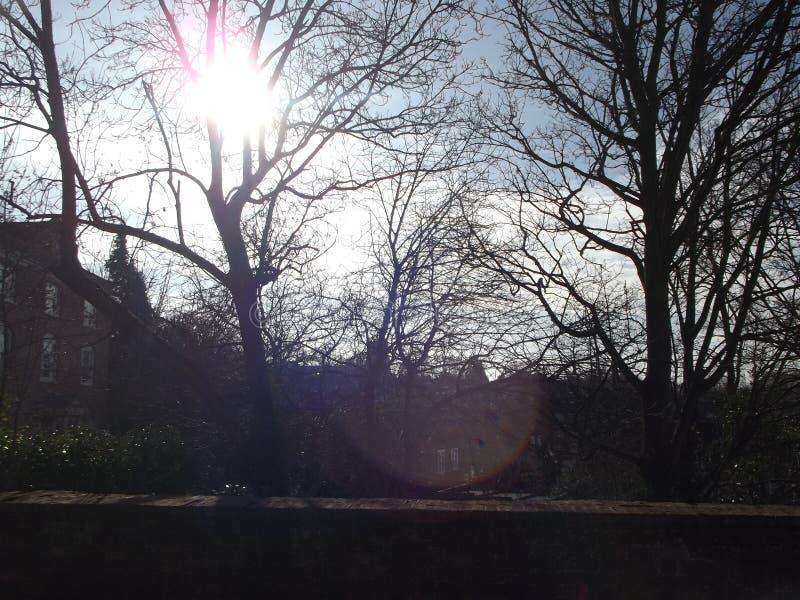 Árvores Sunlit fotografia de stock royalty free