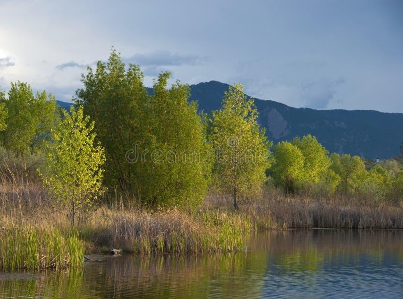 Árvores Sunlit que enfrentam uma tempestade imagens de stock