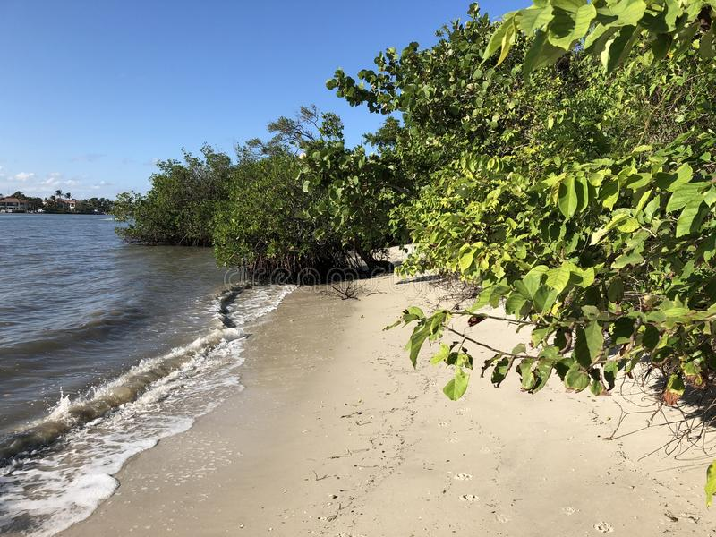árvores tropicais em uma praia isolado fotografia de stock royalty free