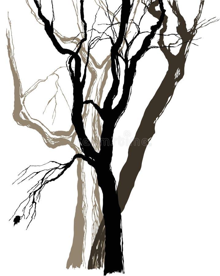 Árvores velhas ilustração stock