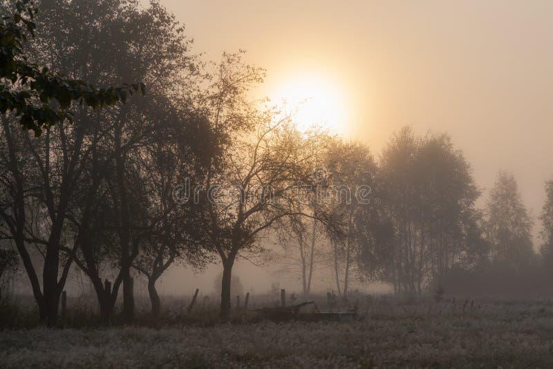 Árvores velhas do jardim na manhã enevoada imagens de stock royalty free