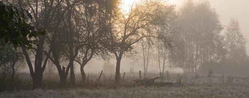 Árvores velhas na manhã enevoada imagem de stock