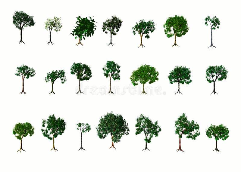 Árvores. Verão