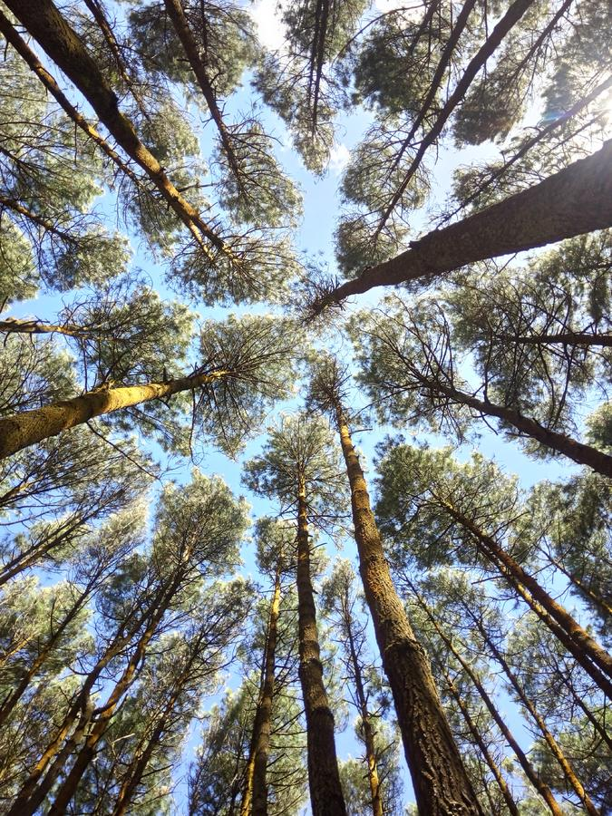 Árvores verdes imagem de stock royalty free