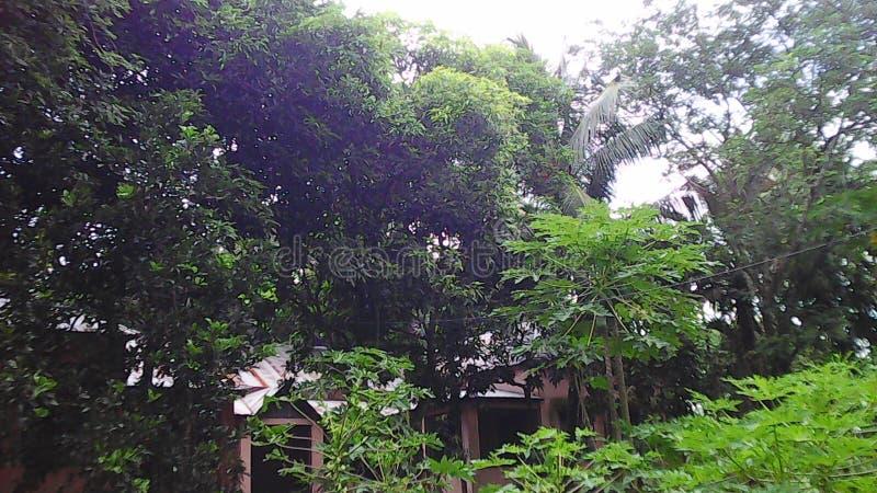 Árvores verdes imagem de stock