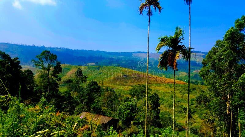 Árvores verdes Céu azul Clique da natureza fotos de stock