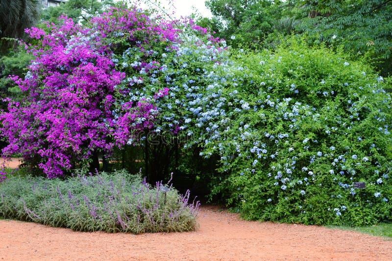 Árvores verdes coloridas das flores e das plantas no fundo da paisagem da natureza do ar livre do jardim imagem de stock