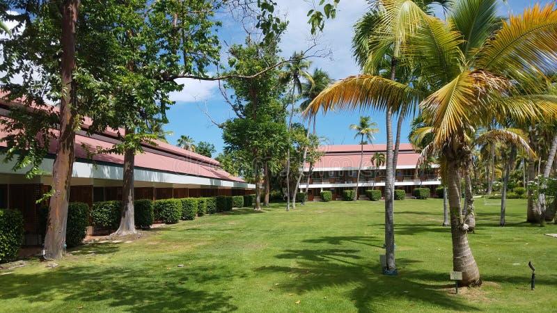 Árvores verdes com grama ou gramado e construções em Guanica, Porto Rico imagens de stock