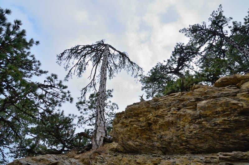 Árvores verdes e árvore seca na inclinação rochosa foto de stock