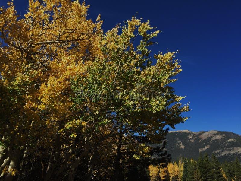 Árvores verdes e amarelas fotos de stock