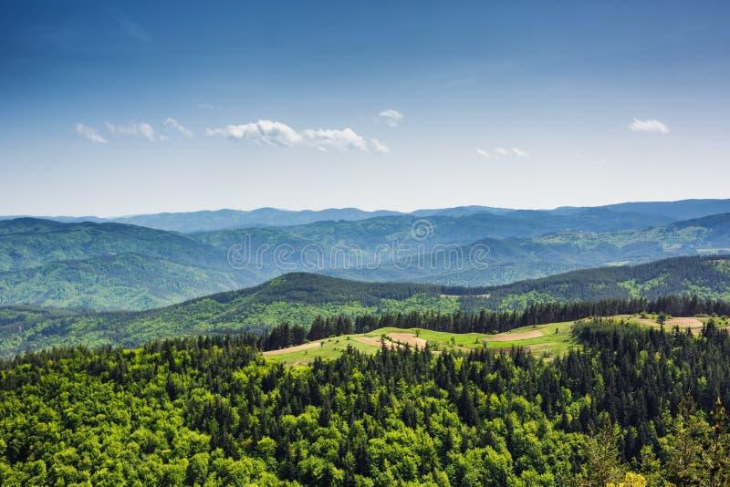 Árvores verdes frescas da floresta sonhadora na madeira bonita da montanha foto de stock royalty free