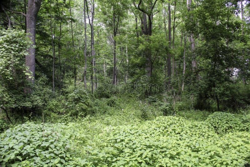 Árvores verdes luxúrias e plantas em um fundo da floresta fotos de stock