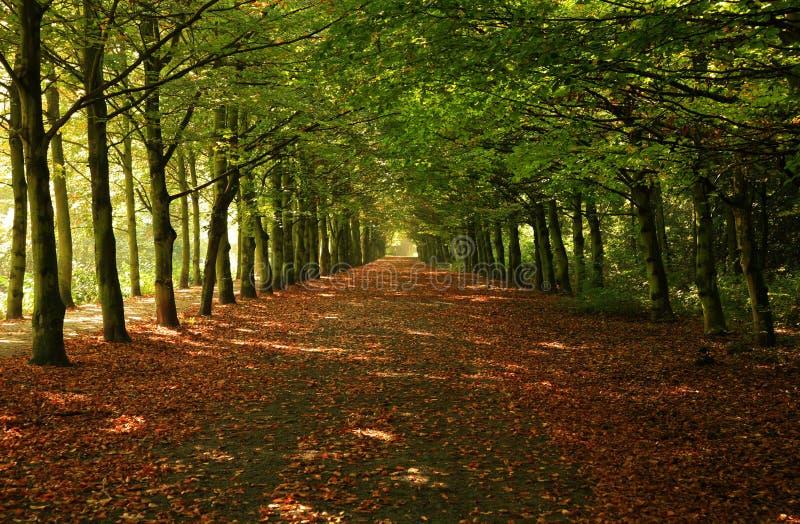 Árvores verdes na fileira fotos de stock