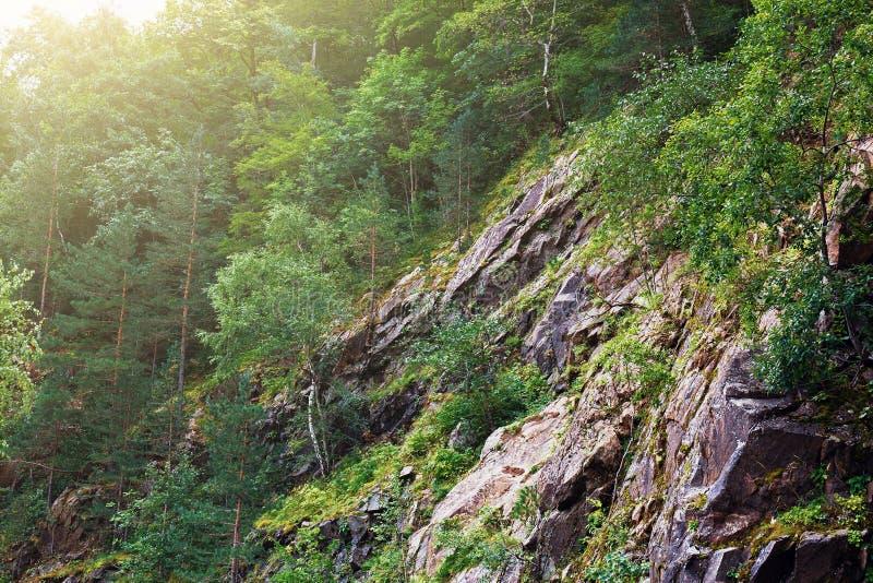 Árvores verdes na luz solar na inclinação de pedra da montanha ou da rocha, paisagem da natureza do verão fotografia de stock royalty free