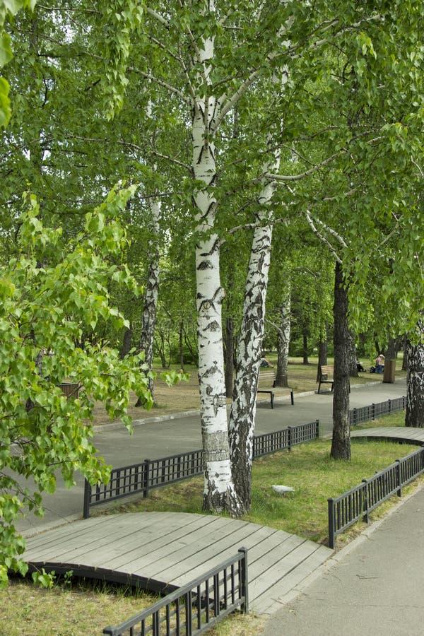Árvores verdes no parque da cidade na luz solar fotografia de stock