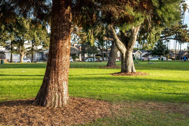 Árvores verdes no verão no parque com luz do sol foto de stock royalty free