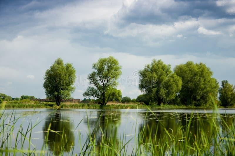 Árvores verdes sobre o lago foto de stock