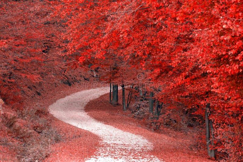 Árvores vermelhas na floresta fotografia de stock