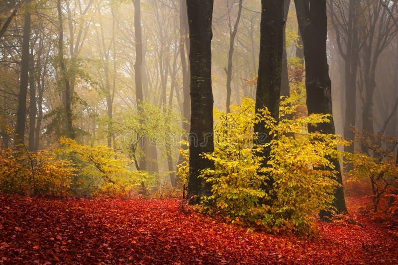 Árvores vermelhas na floresta fotografia de stock royalty free