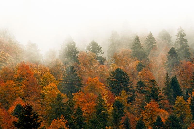 Árvores vermelhas na névoa foto de stock royalty free