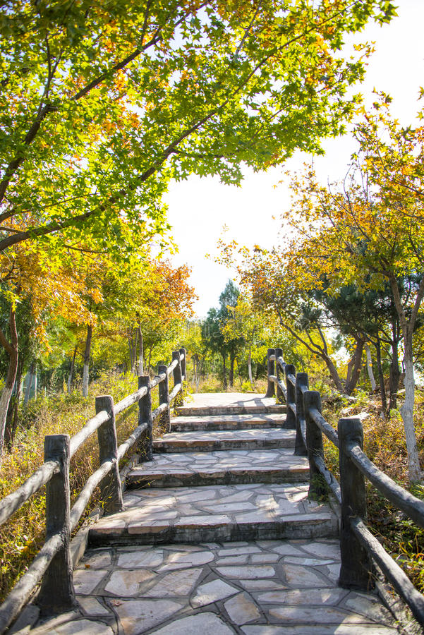 Ásia China, Pequim, o palácio do norte, Forest Park nacional, as etapas, os trilhos de madeira, as folhas de outono foto de stock