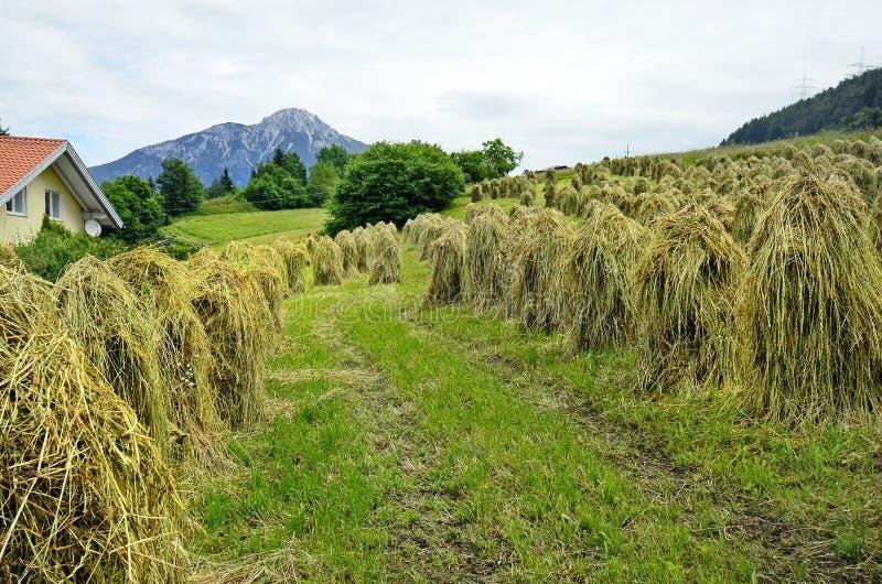 Áustria, Tirol foto de stock
