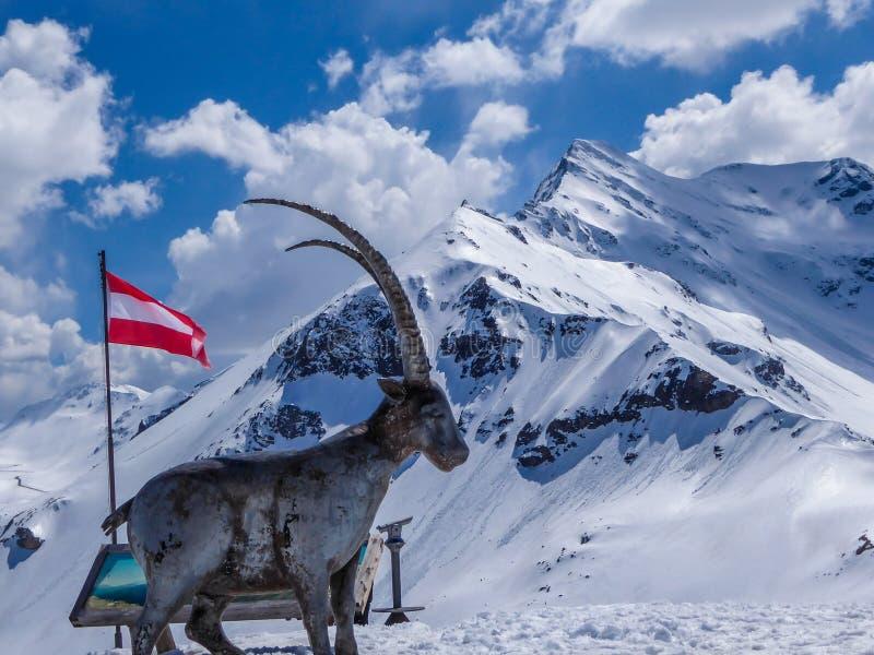 Áustria - um monumento da cabra de montanha com montanhas nevados como uma gota traseira imagem de stock royalty free