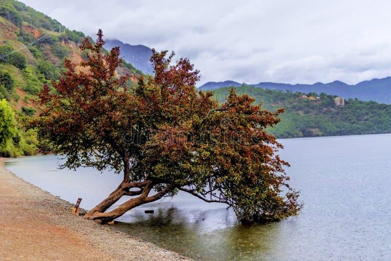 ¹ de æ de ½ de ² de ¸æ de ³ de æ – vue de lac Lugu photo libre de droits