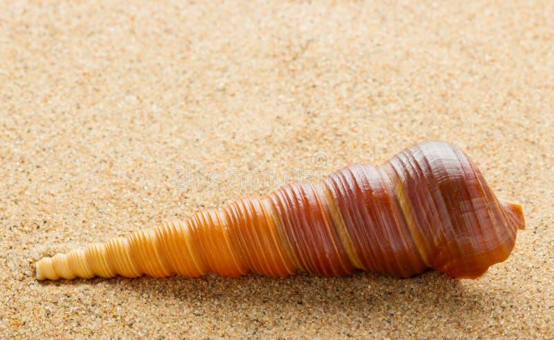 Ââshell do mar na areia fotografia de stock royalty free